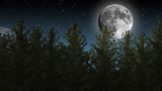 green trees with full moon