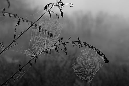 grayscale photography of spider webs
