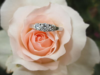 silver engagement ring on pink rose