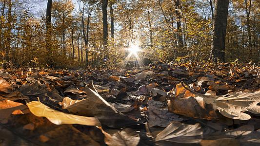 brown leaves on soil