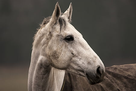 closeup photography of white horse