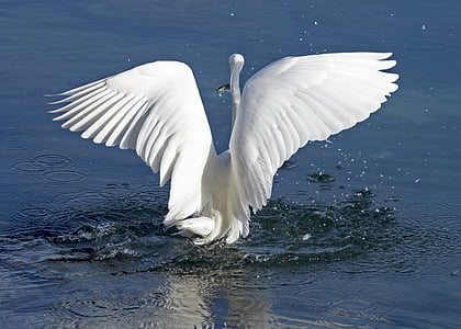 shallow focus photography of white swan