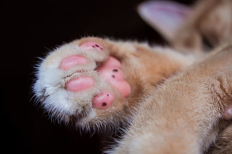 close-up photo of orange cat paw