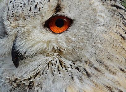 closeup photo of owl