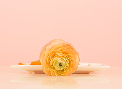 yellow camellia near white plate
