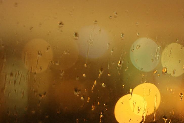 bokeh photography of rain drops