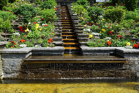 fountain surrounded with plants