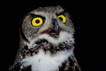 gray and black owl with beak opened