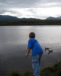 boy feeding two ducks on body of water during daytime