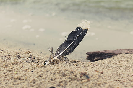 black feather on brown sand