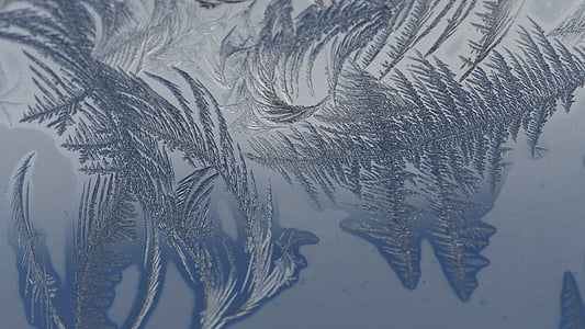 cold, frost, macro photography, winter, window, reflection