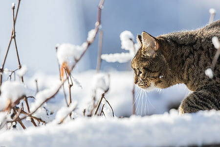 brown tabby cat on the snowy field
