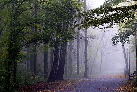 road between trees with fog at daytime