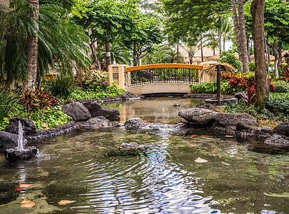 landscape photography of ponds with green tropical trees