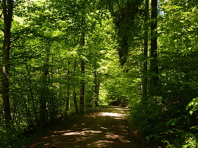 forest pathway photo during daytime