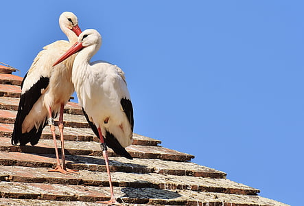 two white storks perched on brown roof during daytime