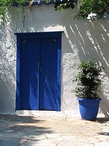 weeping fig plant on vase near blue door