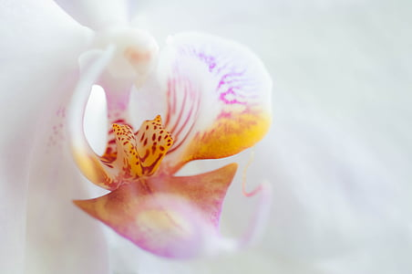 orchid, flower, blossom, bloom, plant, white