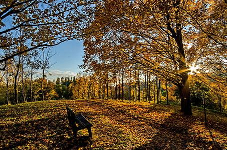 empty bench near tree