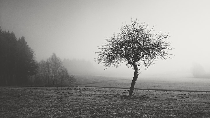 grayscale photo of dried tree