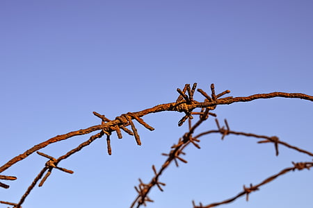 shallow focus photography of rusted brown steel barbed wire