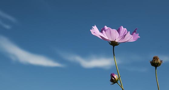 macro photo of pink petaled flower
