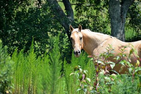 brown stallion horse on green gras