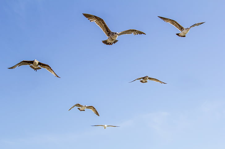 six brown birds flying in the sky