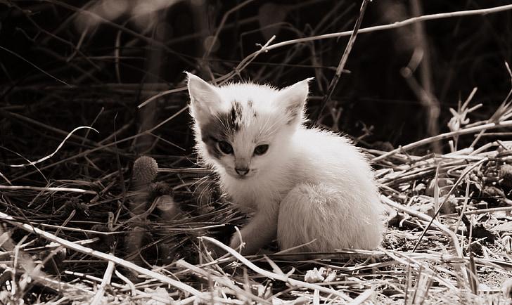 white kitten on grass
