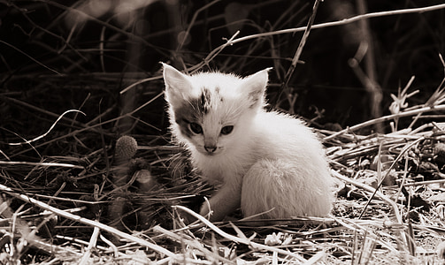 white kitten on grass
