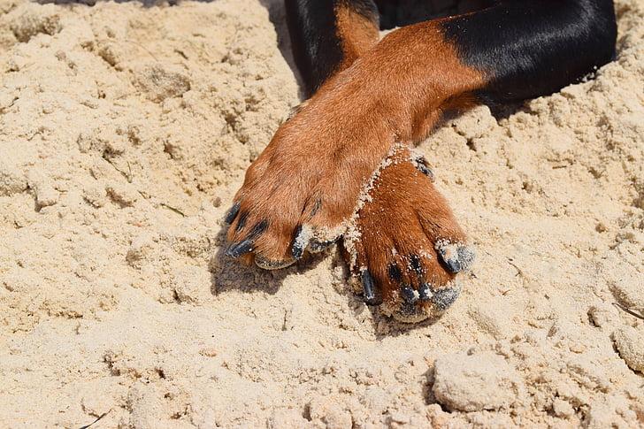 patas de perro con arena de playa