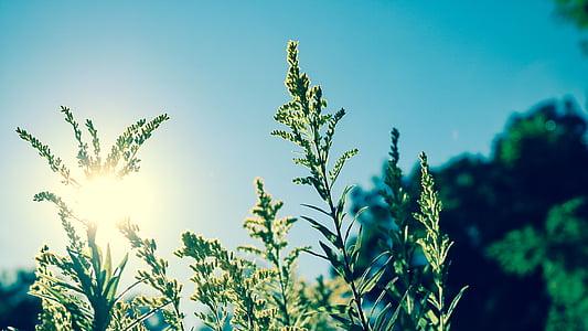 green leaf plants under blue skies at daytime
