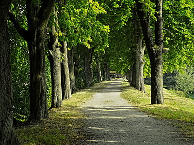 photo of green leafed trees during daytime