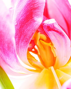 closeup photo of pink and yellow petaled flower