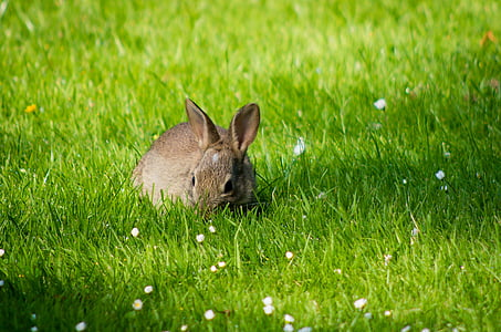 photo of gray rabbit surrounded by green grass