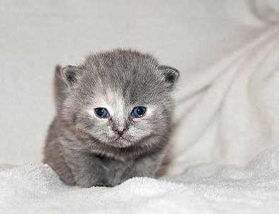 gray kitten on white textile