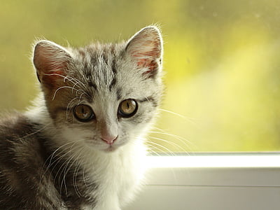 shallow focus photography of tricolored Tabby kitten