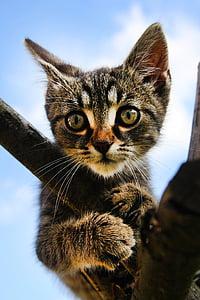 closeup photo of brown tabby kitten