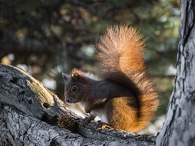 gray squirrel on gray tree trunk
