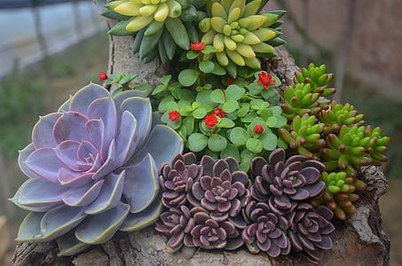 several succulent plants