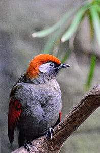 orange and grey bird perched on wood