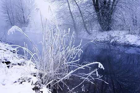 snowy riverbank with frozen thistles
