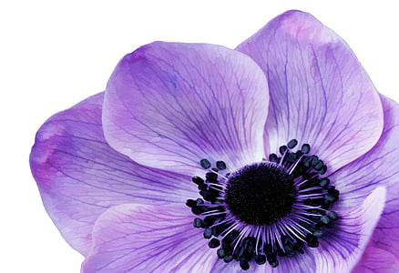 close-up photography purple petaled flowers