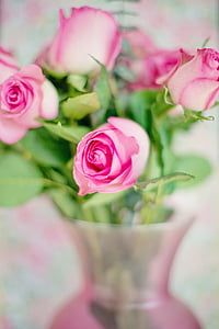 pink rose with bokeh effect