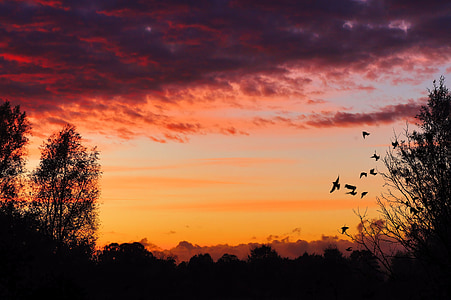 silhouette of birds flying near trees during golden hour