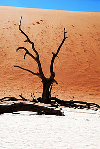 brown withered tree surrounded by gray sand