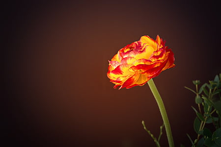 yellow-and-red petaled flower close-up photo
