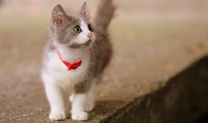 white and gray kitten on pavement