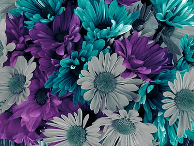 closeup photo of teal, gray, and purple petaled flowers