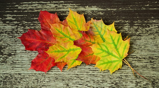 dried maple leaves on brown wooden board